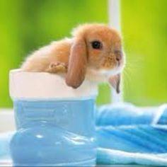 Thirsty little rabbit