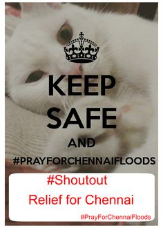 Contact NGOs under one roof at: https://www.solvemyproblemm.com/ngo_experts.php #Shoutout your concern and share #PrayforChennaiFloods