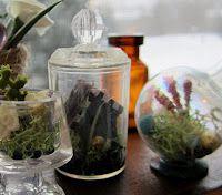 DIY Mini Terrariums by Heather Holloman on the Shades of Tangerine Blog