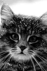 """Résultat de recherche d'images pour """"photo chat en noir et blanc"""""""