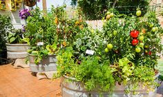 Growing Vegetables on your Patio with Shirley Bovshow