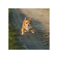 A long haired brown and white Chihuahua Running Wood Wall Decor   terrier chihuahua, chihuahua tattoo ideas, chihuahua tattoos #chihuahuawarrior #chihuahuapoodlemix #chihuahuasdailypost Chihuahua Terrier Mix, Chihuahua Puppies, Chihuahuas, Chihuahua Tattoo, White Chihuahua, Thing 1, Pet Costumes, Dog Crate, Dog Supplies
