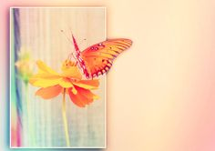 beautiful butterfly blank greeting card you can customize