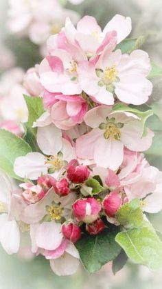 Apple blossoms ~Debbie Orcutt ❤