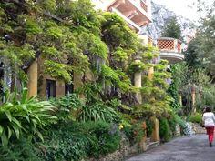 Le Clos du Peyronnet, Avenue Aristide Briand, Menton British Things, French Riviera, Cruise, Plants, Image, Gardens, Cruises, Flora, Plant