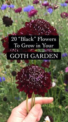 Garden Crafts, Garden Projects, Cute Wallpapers Quotes, Garden Terrarium, Black Flowers, Gothic Wedding, Planted Aquarium, Plant Care, Garden Planning