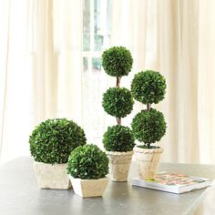"They look real because they are. These lush Preserved Boxwood Topiaries are hand made from natural boxwood that's been specially treated to retain its glossy, deep green color and soft texture. ""Planted"" in a weathered white terra cotta pot.Preserved..."