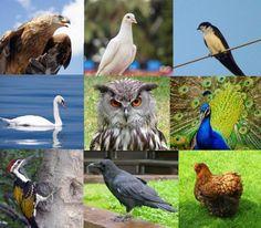 Önismereti madár-teszt – avagy a benned rejlő szellemi plusz Owl, Bird, Animals, Animales, Animaux, Owls, Birds, Animal, Animais