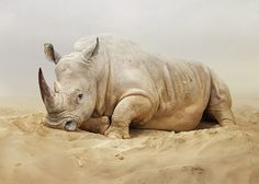 Phenominal #nature #photography captures this #rhino - check out the others - amazing.