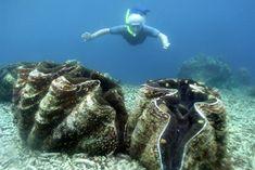PALAU: Fantastic snorkeling at The Rock Islands, Palau.