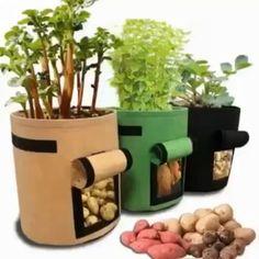 Greenhouse Vegetables, Planting Vegetables, Growing Vegetables, Greenhouse Plants, Small Greenhouse, Root Vegetables, Growing Plants, Vegetable Planters, Tomato Vegetable