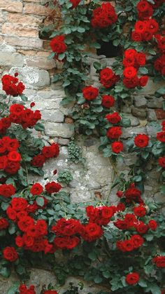 flower garden care 25 Marvelous Flower Walls It matter if it is inside or outside, it looks absolutely amazing. Flower walls will be the perfect for your wedding or your garden. Garden Care, Amazing Flowers, Colorful Flowers, Red Flowers, Flowers Garden, Vintage Flowers, Flower Colors, Flowers Nature, Nature Nature