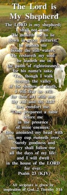 The Lord Is My Shepherd, Scripture From Psalm 23 - Pack of 25 Cards
