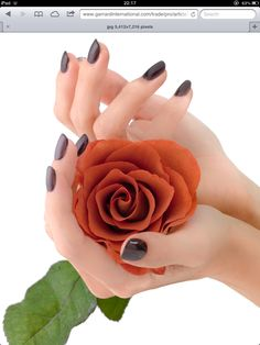 Nothing But Flowers, Pics For Dp, Beautiful Rose Flowers, Orange Roses, Black Nails, Flower Wallpaper, Hair Inspiration, Flower Arrangements, Heart Ring