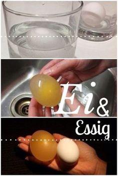Frage: Was passiert, wenn wir ein rohes Hühnerei über Nacht in Essig einlegen?   Die Eierschale hat sich im Essig nach 12 Stunden vol...