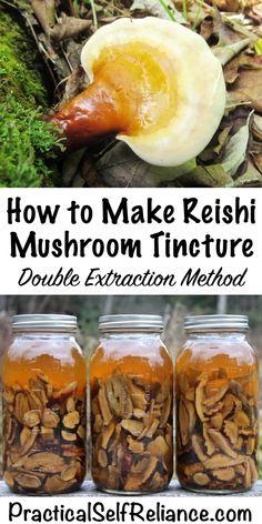 How to Make Reishi Mushroom Tincture ~ Double Extraction Mushroom Tincture Healing Herbs, Medicinal Herbs, Natural Healing, Natural Health Remedies, Herbal Remedies, Herbal Tinctures, Herbalism, Mushroom Benefits, Mushroom Tea