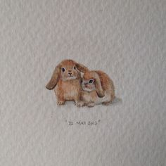 Day 142 : Lop bunnies from Holland for Rachel and Will.