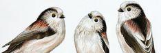 Nature Sketch, Birdwatching, Sketch Art, Bird Art, Pencil Art, Watercolor Painting, Layering, Van, Birds