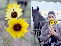 sunflowers & horses.. A couple of my favorite things <3