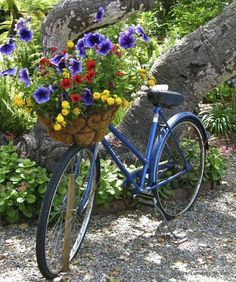 Flowers in the basket on a blue bike