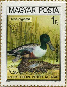 Aves protegidas Anas clypeata Pato cuchara 11/11/80 Hungría (Rep. Pop.)