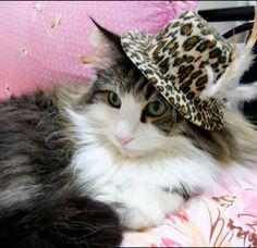 I've got cat class and I've got cat style.