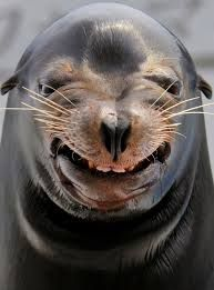 sea lion - Google Search