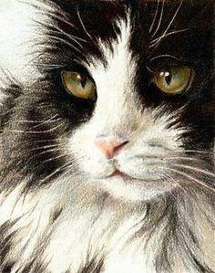 colored pencil! Gato preto e branco.