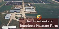 Learn more about all of the stresses that come with running a pheasant farm.