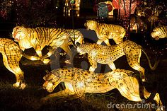 Photo about Image of lighted up tiger and leopard lanterns. Image of lamp, animals, glow - 3711716 Carnival Floats, Festival Lights, Lantern Festival, Tissue Paper Lanterns, Light Fest, Lantern Designs, Peacock Art, Animal Costumes, Digital Fabrication