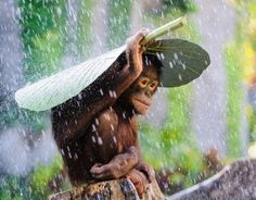 Photo d'orangs-outans à Bali (Indonésie)
