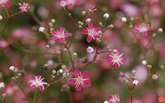 Rostliny, které se ze zahrad rády ztrácejí