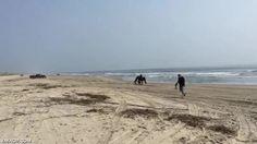 Dos potros salvajes jugando en la playa como dos niños pequeños