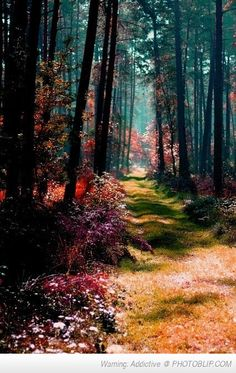 Time for a stroll here in the Magical Forest, Poland. Seriously Poland is one of the most beautiful places I have ever been! Beautiful World, Beautiful Places, Beautiful Forest, Amazing Places, Wonderful Places, Peaceful Places, Beautiful Flowers, Foto Nature, Nature Nature