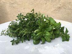 Plukk regelmessig buketter med urter gjennom sesongen, så kan du nyte av godsakene også til høsten og vinteren. Foto: Kari Gjertrud Dølgaard