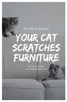 How to Understand Cat Behavior and Its Body Language? Furniture Scratches, Cat Furniture, Mean Cat, Cat Jokes, Cat Info, Pet Vet, Cat Care Tips, Pet Care, Owning A Cat