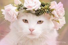 Who ever said cats can't be princess?