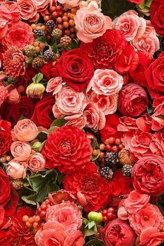 Roses, Dahlias & Berries | Red