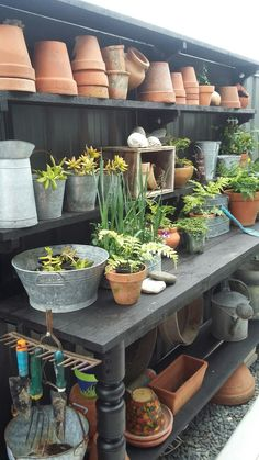 Loving my potting bench Potting Station, Indoor Orchids, Potting Benches, Back Gardens, Glass House, Container Plants, Sheds, Garden Pots, Garden Inspiration
