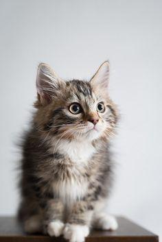 Cat | Flickr - Photo Sharing!