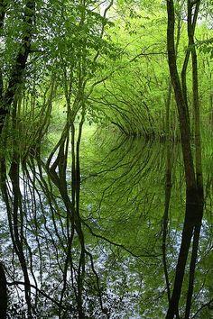 Parco del Delta del Po, Italia