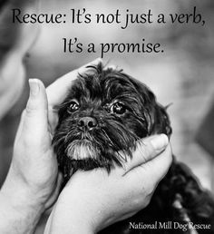 #Rescue: It's not just a verb, it's a promise. - Enlace permanente de imagen incrustada