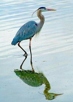 Heron Crane in reflection