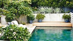 A swimming pool is one of the favorite places to refresh our mind. It is no wonder that people will seek the resort with modern and luxurious swimming pool to spend their vacation. A nice swimming pool design will require . Swimming Pool Designs, Swimming Pools, Outdoor Pool, Outdoor Gardens, Outdoor Privacy, Kleiner Pool Design, Pool Plants, Plants Around Pool, Potted Plants