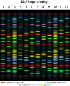 Find Example Dna Fingerprinting 10 Individuals Tested stock images in HD and millions of other royalty-free stock photos, illustrations and vectors in the Shutterstock collection. Dna Fingerprinting, Ancestry Dna, Medical Illustration, Dna Test, Graphic Design Tutorials, Being Used, Royalty Free Stock Photos, Clip Art, Unique