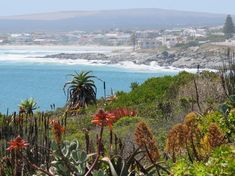 Yzerfontein in Western Cape Area Overview West Coast, Westerns, Cape, Mountains, Beach, Nature, Travel, Outdoor, Mantle