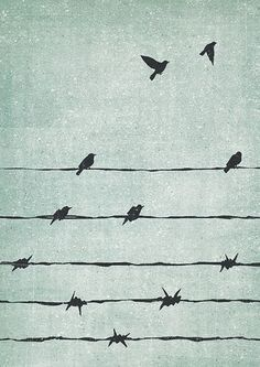 7 Freedom   Wire fences are, of course, associated with captivity. Here that concept is explored by slowly morphing the spikes on the fence into birds.