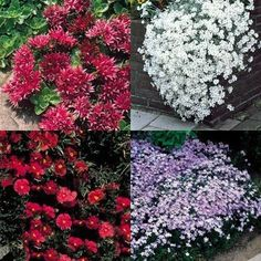 Ground Cover For Deep Shade | Ground Cover Perennials
