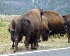 I stood on the road & they brushed past me! I cried, it was magic. They are spectacular! <3