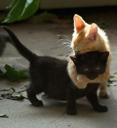 Someone just wanted a hug! (25 Cute Pictures to make you smile)